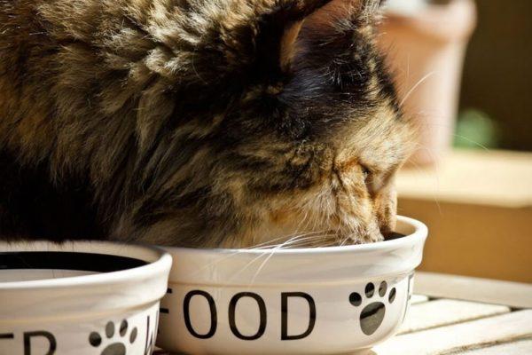 alimentation pour chats sterilises